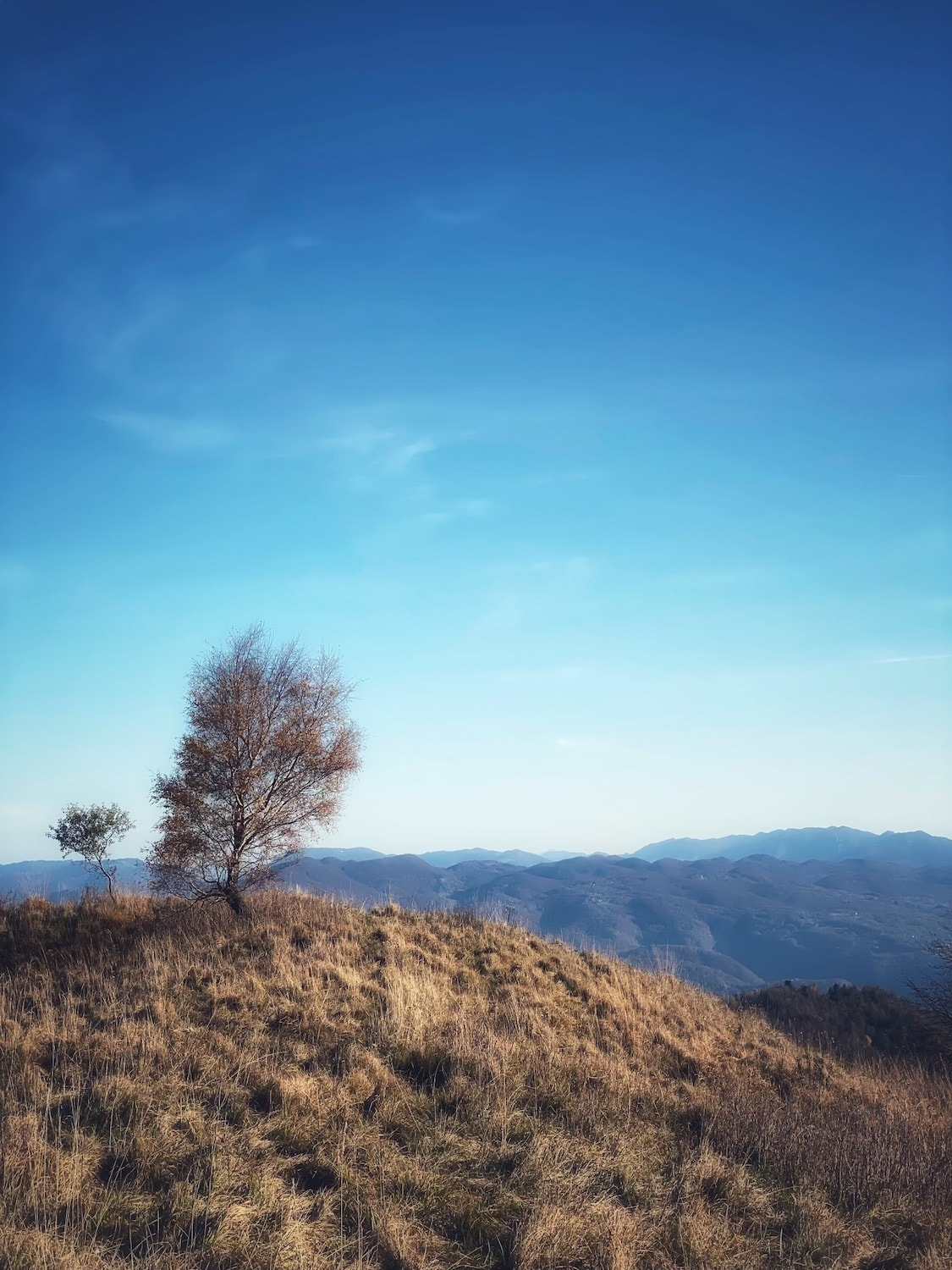 a single tree in the foreground with a clear blue sky and mountains in the background